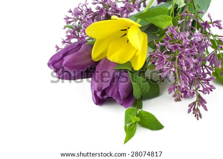 A bouquet of vibrant purple and yellow spring tulips and lilac blooms  on a white background with copy space, great for Mother's Day or Easter