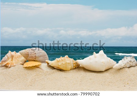 A bunch of different seashells  in the sand at the beach, Day at the beach
