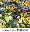 A bunch of flowers growing inside of pots inside of a greenhouse nursery. - stock photo
