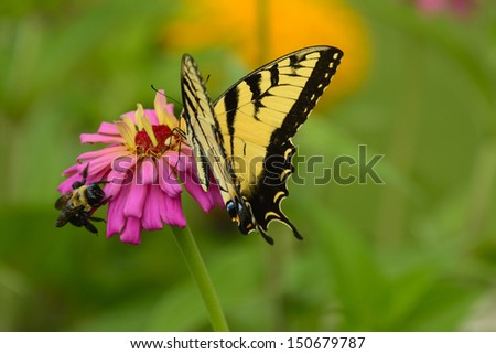 a butterfly and a bee on same flower