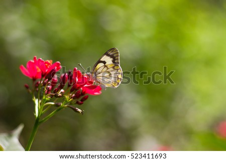 A butterfly sitting on a flower. A shot of a butterfly sucking nectar from a flower on a sunny day at a garden in New Delhi, India.