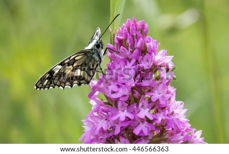 A butterfly sitting on an orchid