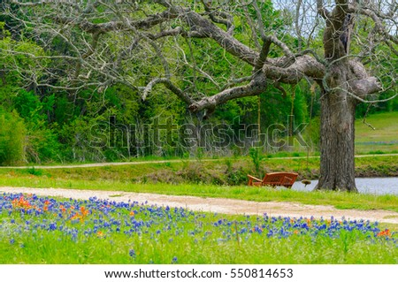 A calming scene of Texas Bluebonnets mixed with Indian Paintbrushes with a winding dirt road going around a small pond with a large oak tree and swinging bench chair.