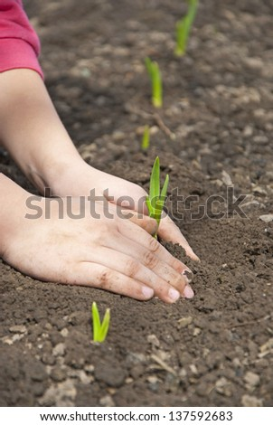 A child sits down sprouts in the garden