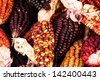 A Close up or Cheerful and Colorful dried Indian Corn - stock photo