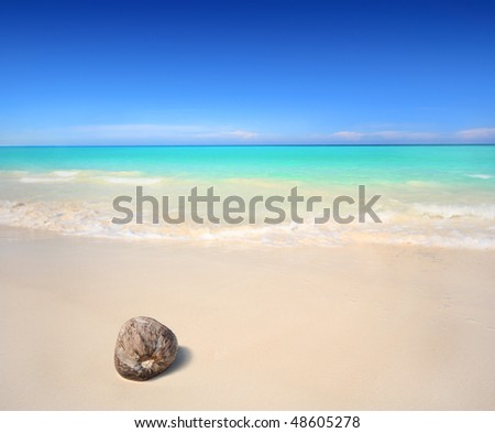 A coconut washed ashore on a tropical beach.