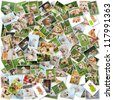 A collage of photos of golden retriever 101 pieces, a collection of photos isolated on a white background, Which can be found in high resolution in my portfolio. - stock photo