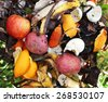 a compost pile in a backyard garden with rotting fruit and vegetables good for recycling or environmental designs   - stock photo
