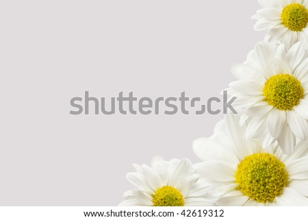 a corner border made of vibrant white and yellow daisies