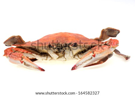 A crab isolated on a white background