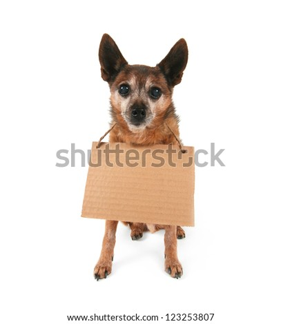 a cute chihuahua holding a sign