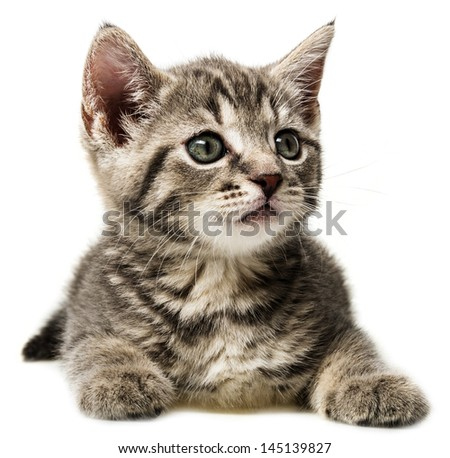 a cute little kitten isolated on white background