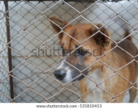 a depress face of homeless dog waiting for freedom