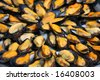 A display of fresh mussels for sale at a fish market - stock photo