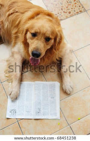 A dog reading book on the floor
