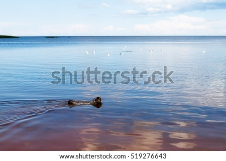 A dog swims in the lake