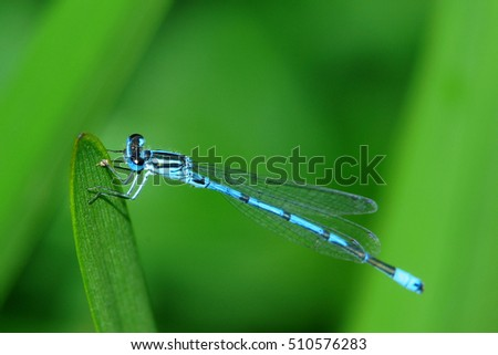 a dragon fly sits on a leaf