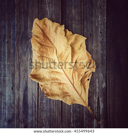 A Dry Teak Leaf Texture Dead Leaf background Nature Degign.
