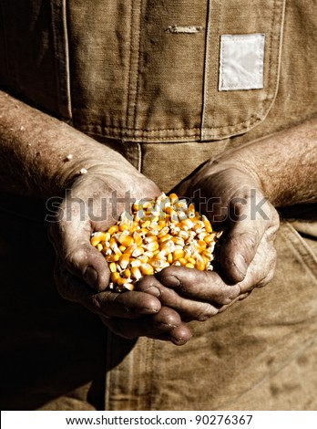 A farmer holds seed corn in his calloused hands (sepia tint added).