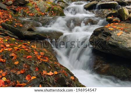 A fast flowing river pours down rocky leaf covered banks.