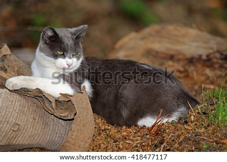 A Feral Cat Sleeping Outside in the While Enjoying Warmth of the Sun