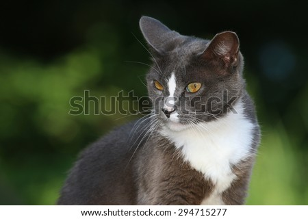 A Feral Cat with Intense Yellow Eyes