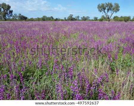A field of purple flowers.