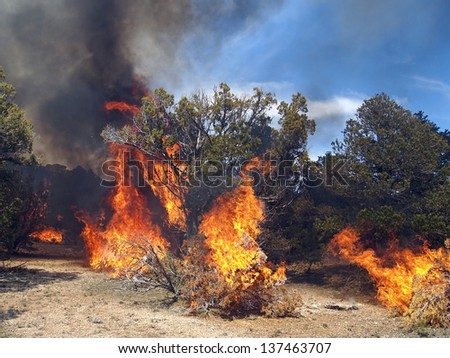 A fire burning in a pinyon-juniper shrub land.