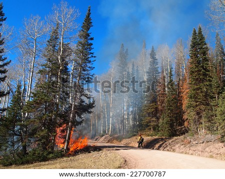 A fire fighter approaches a wildfire along a road in the forest.