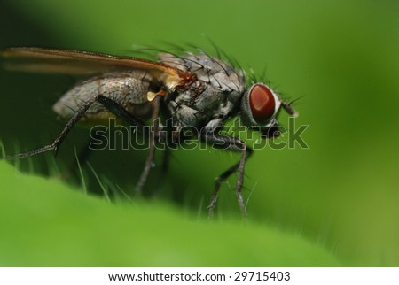 A fly with nature green background
