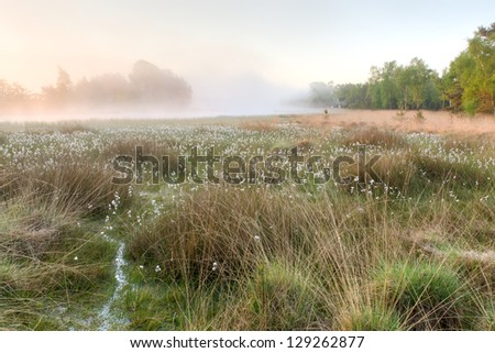 A foggy morning on a fen in spring