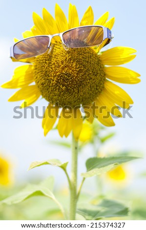A glasses on sunflower