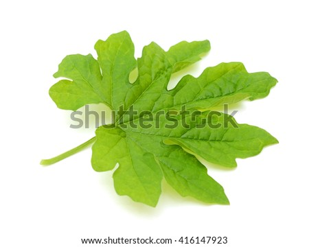 A green leaf of Bitter melon isolated on white background