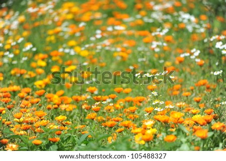 a green meadow with a lot of flowers