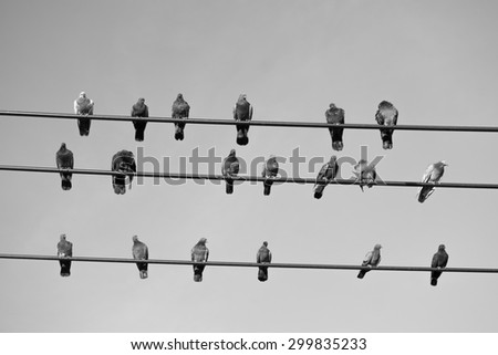 A group of pigeons perched on a power line in black and white.