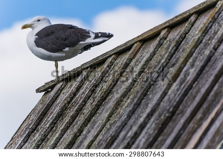 a gull on a roof