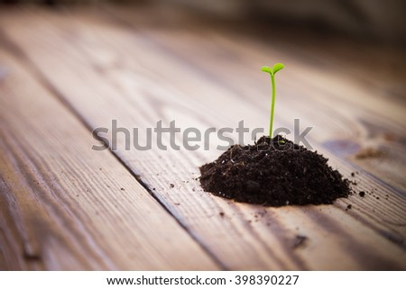 A handful of earth with a young green shoots tangerine tree on a wooden table. Sprouts citrus trees. Sprouting seeds. Empty space. Background. Earth Day. Spring. Summer. New life