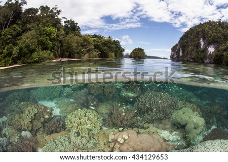 A healthy coral reef grows near limestone islands in Alyui Bay, Raja Ampat, Indonesia. This beautiful bay lies just south of the equator and is home to a wide set of tropical marine life.