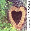 a heart shaped hollow hole in a tree trunk  - stock photo