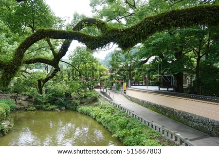 A Japanese garden with grass, trees and lake.