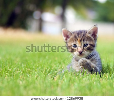 Kitten plays in the backyard of a home stock photo