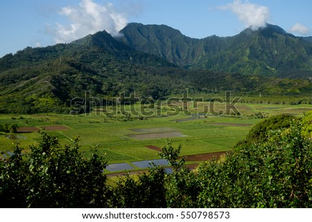 A large fertile valley in Kauai, Hawaii
