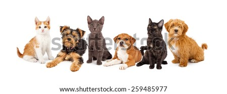 A large group of young kittens and puppies together. Image sized to fit a popular social media timeline cover placeholder