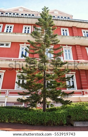 A large pine tree in a brightly decorated building.