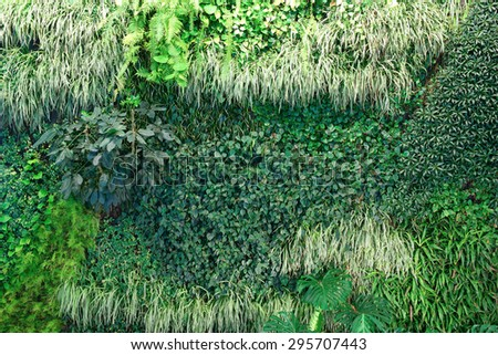 A living wall background showing lush growth of plants covering an entire wall