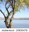 A lone tree. The Thermalito Forebay is located four miles west of the city of Oroville. - stock photo