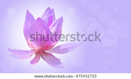 a lotus flower on soft pastel color,in beautiful  background