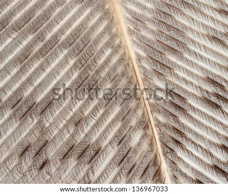A macro view of details of a bird feather