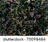 A mixed assortment of diatoms.  Image enhanced.   Magnification 400X - stock photo
