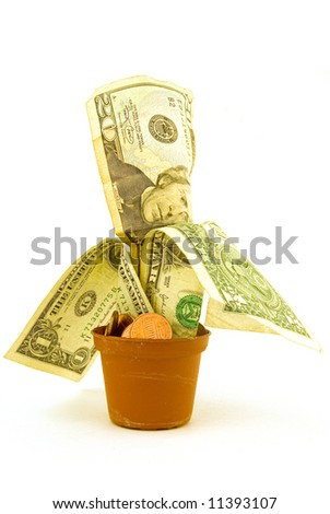 a plant's pot with money growing from it on white background